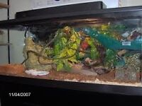 snake tank for sale