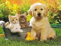 Pet sitters Uk