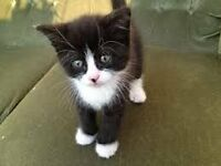 black and white kittens need good home