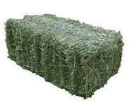 Hay for sale: Small square bales suitable for horses