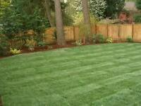 Complete Landscape Sodding- Bed Design- Planting- Mulch-Drainage