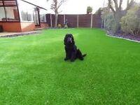 Quality artificial grass