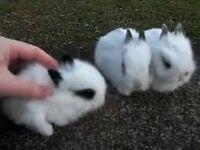 Gorgeous white baby rabbits