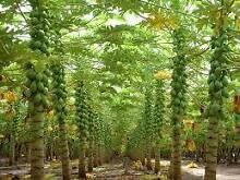 Bargain 1acre  fruit farm-let passive income $2000 secures Sydney City Inner Sydney Preview