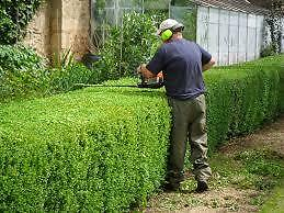 Calgary Hedge Trimming by Your Tree Doctor