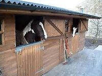 Looking stables/yard to rent!!