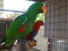 Variety of Birds from $4.00 Valley View Salisbury Area Preview