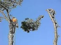 Professional tree removal in Calgary with best price
