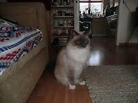 Cat/Pet Sitter