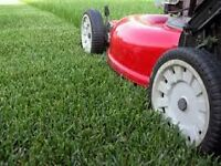 LAWN MOWING SERVICES ( Red Deer)