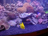 marine fish tank live sand black carbisea enough to fill a 4x2 tank cost £70 will take £30