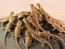 Willing to take in ANY REPTILES