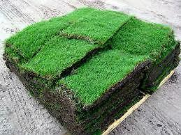 SUMMER SOD SPECIAL $1.00 SQ/FT WE DO INTERLOCK ALSO BOOK NOW!!!