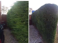TREES TRIMMING PLANTING SOD LANDSCAPING HOME REPAIR CLEANING