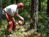 INTRODUCTION TO SAFE CHAINSAW OPERATION - April 18th