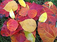 Fall cleanups and plant wrapping.