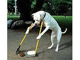 Pet Waste Services - Sarnia - Bluewater EPA - Pooper Scoopers