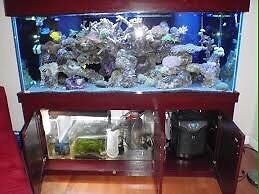 Looking for 220 gallon aquarium or in that size range
