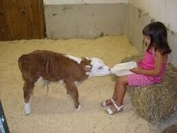 Wanted bottle calves any kind