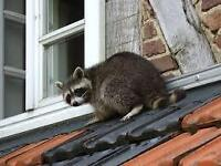 ***AFFORDABLE WILDLIFE REMOVAL CALL 416 834-6426***