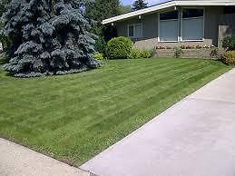 LAWN CARE - BEST PRICES - BRP PROPERTY MAINTENANCE