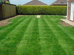 Lawns,weeds,gardening,trees,FROM $30 Seven Hills Blacktown Area Preview