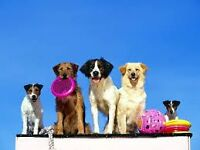 `` Les chiens en vacances `` - Pension joyeuse pour chien
