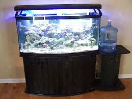 75 Gallon Bowfront Aquarium With Stand