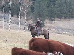 Rural home and pets/livestock cared for while on holiday Strathcona County Edmonton Area image 4
