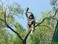 Tree Trimming and Removal- Call Kyle 226 787 6095