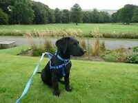 Paws In The Park Sadie's Summer Dog Walking Service Covering the Hebble Trail & Manor Heath Park