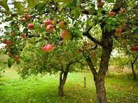 Wanted FREE local apples, please