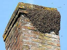 bee swarm and nest removal, free service Taroona Kingborough Area Preview
