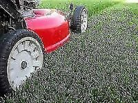 Clean Cut Lawncare 4 You ( looking for 1-2 more clients)