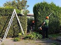 Allwood landscaping & garden services