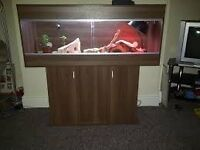 4ft viv with accessories £40 if collected today