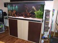 FLUVAL ROMA 200 3,5FT FISH TANK FULL SETUP WITH CABINET AND EXTERNAL FILTER