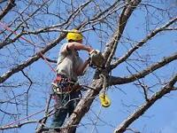 ■■■ BUDGET TREE REMOVAL SERVICE!!! CALL NOW AND SAVE BIG!!!■■■
