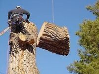 TREE BRANCH REMOVAL,CUTTING. DISPOSAL. 289-992-9428