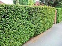 Gardener Wanted