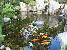 Looking for all kind of free fresh water fish & accessories