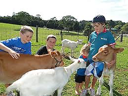 Maleny Dairies Farm & Factory Tour Tickets