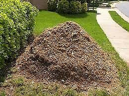 Soil with mulch/wood chips