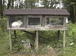 Rabbit breeding groups with cages Aldinga Beach Morphett Vale Area Preview