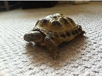 Tortoise with full setup CAN DELIVER £180