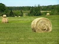 Come and make HAY, summer 2016
