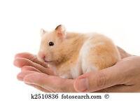 Free Hamster Petsitting In London! Small Animal Rodent Short Term Holiday Sitting Petsitter.