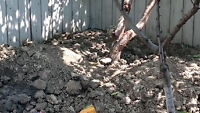 FREE top soil with help.