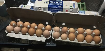 Fertile laying chicken eggs for sale