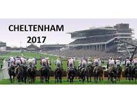 Cheltenham Gold Cup Day - 1 x Tattersalls Ticket